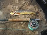 Early season trout